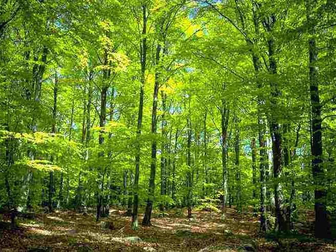 Egelser-Wald (1)